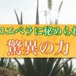 販売促進用PV/健康食品